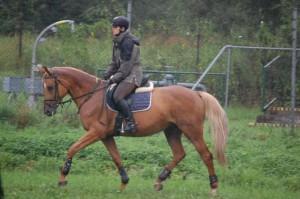 horse_mija_kinsk-big.jpg