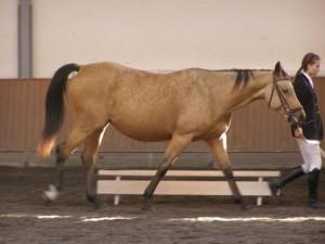 horse_jees_kinsk-big.jpg