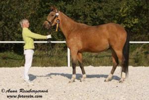 horse_jamajka_kinsk-_2big.jpg