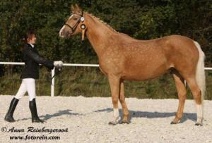 horse_jenny_kinsk-_3big.jpg