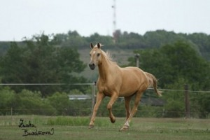 horse_atlanta_kinsk-big.jpg