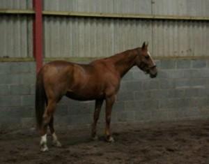 horse_hanes-_2big.jpg
