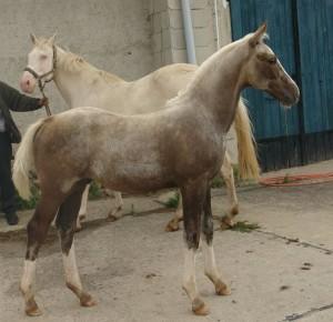 horse_triple_a-_3big.jpg