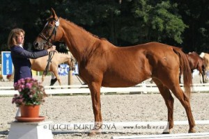 horse_huriska-big.jpg