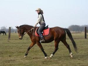 horse_flipra-big.jpg
