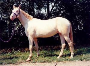 horse_novela-big.jpg