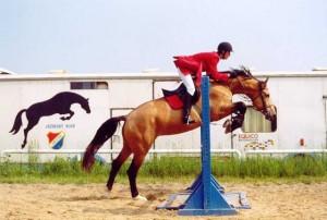 horse_grey-_2big.jpg