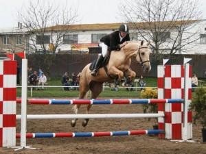 horse_grl-big.jpg