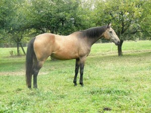horse_glie-_3big.jpg