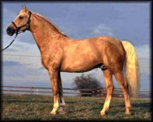 horse_atom-big.jpg