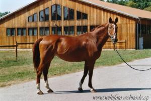 horse_dafn-big.jpg