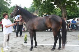 horse_pina_colada-_2big.jpg