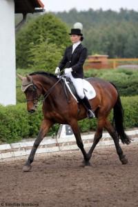 horse_donatela-_2big.jpg