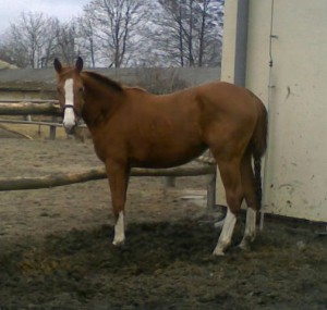 horse_wiktoria-big.jpg