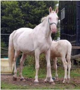 horse_agta_kinsk-big.jpg