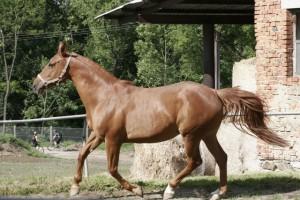 horse_anna_kinsk-_2big.jpg