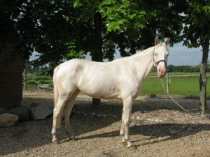 horse_hana_kinska-big.jpg