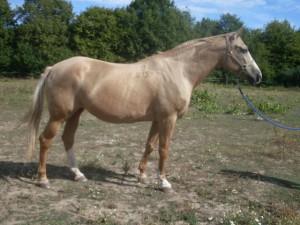 horse_ka269ka-big.jpg