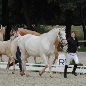 horse_mildka-big.jpg