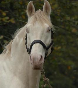 horse_baron-big.jpg