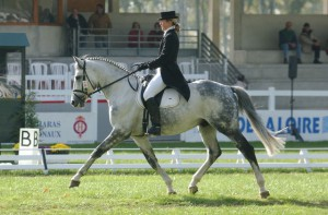 horse_belfast_vasury-big.jpg