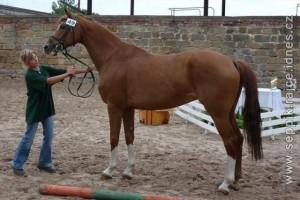 horse_treisy-_3big.jpg