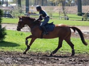horse_vinnie-_3big.jpg
