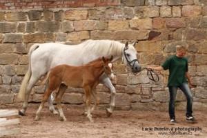 horse_leis-big.jpg