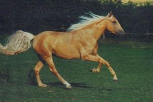 horse_honey-big.jpg