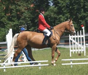 horse_hlubok-_2big.jpg