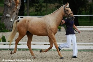 horse_aglaya-_2big.jpg
