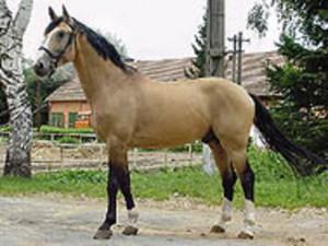 horse_robinson_kubita-big.jpg