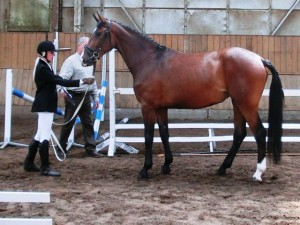 horse_last-big.jpg
