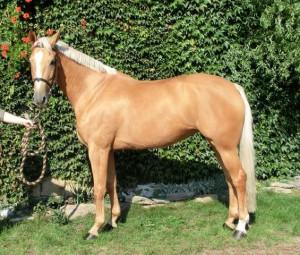 horse_rosemary-big.jpg