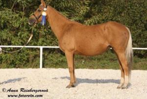 horse_tosca-_2big.jpg